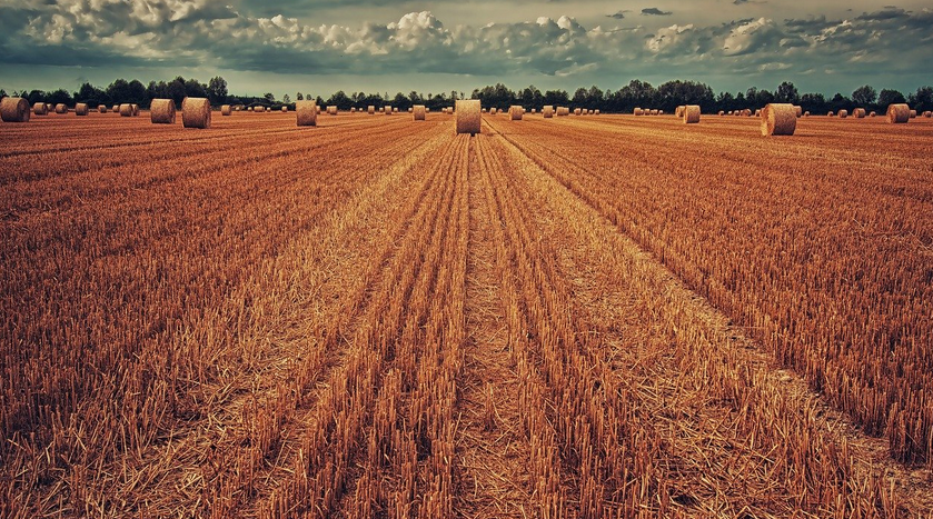 termőföld értékbecslés